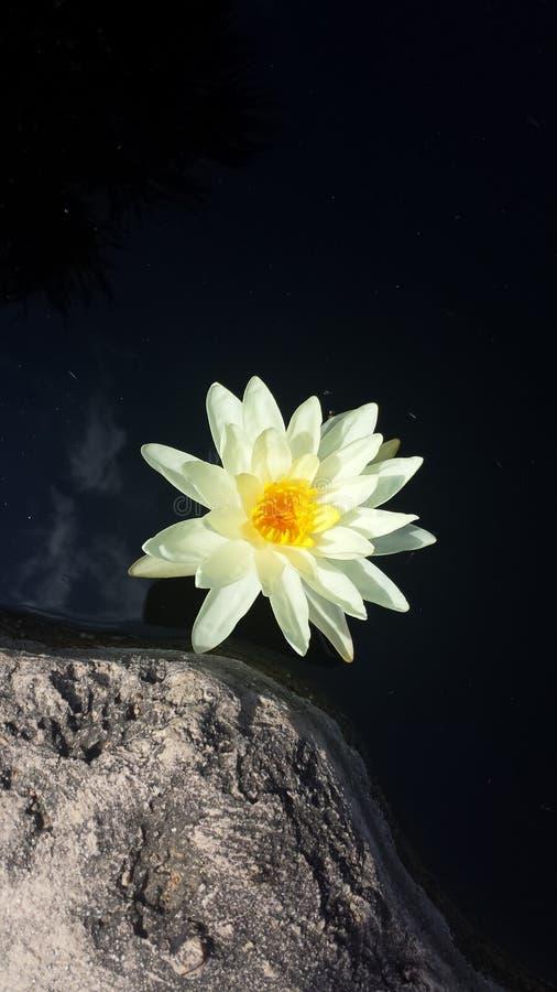 Białego kwiatu natury piękna fotografia obrazy royalty free