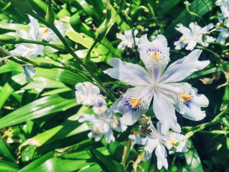 Białego kwiatu sześć płatek obrazy stock