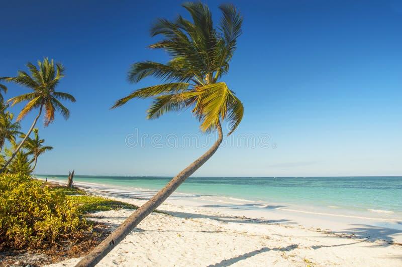 Białego piaska tropikalna plaża z drzewkami palmowymi na północno zachodni wybrzeżu Zanzibar wyspa, Tanzania zdjęcia stock