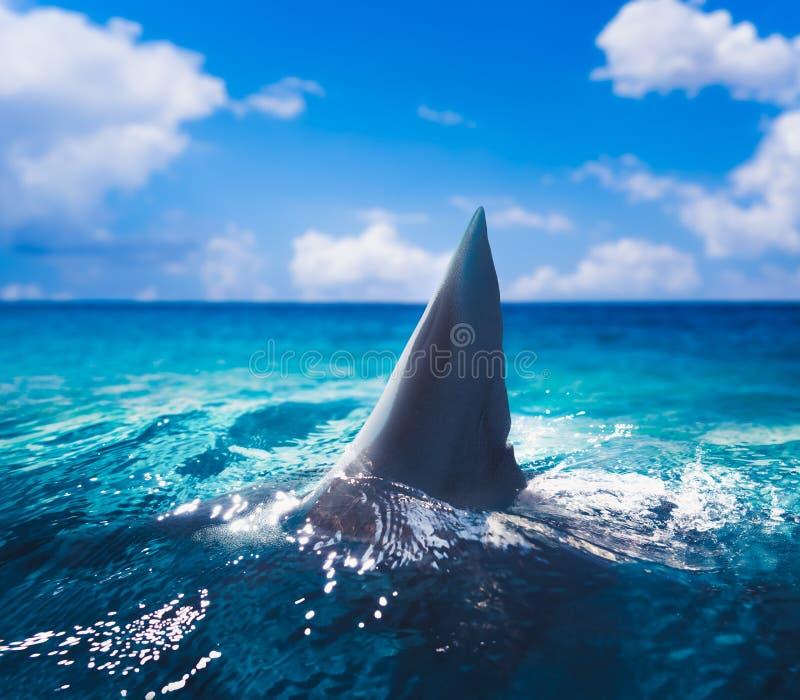 Białego rekinu żebro nad - woda ilustracji