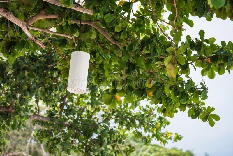 Białego round papierowi lampiony wiesza od drzewo gałąź zdjęcie stock