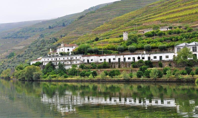 Białego wina gospodarstwo rolne odbijał w wodzie - Douro rzeka fotografia stock