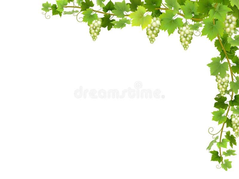 Białego winogrona gałąź w kącie ilustracja wektor