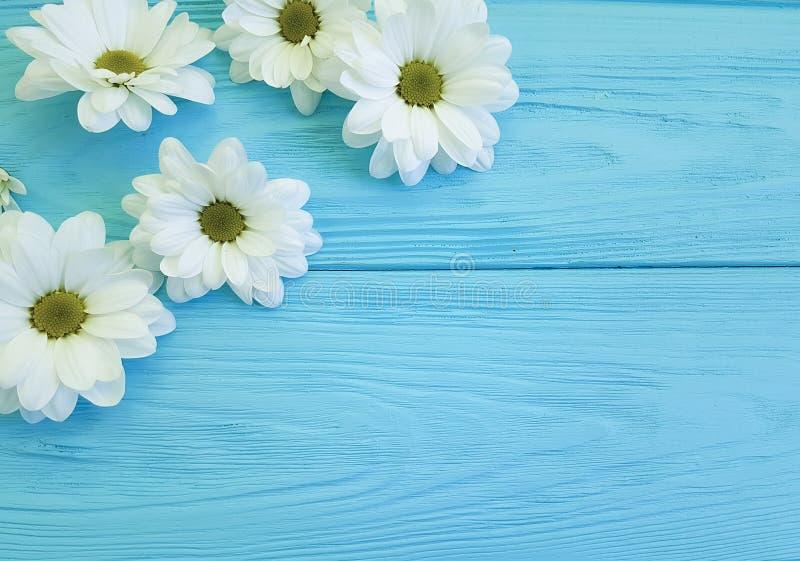 Białej chryzantemy głowy urodzinowy kwiat na błękitny drewniany kwiecistym obrazy stock