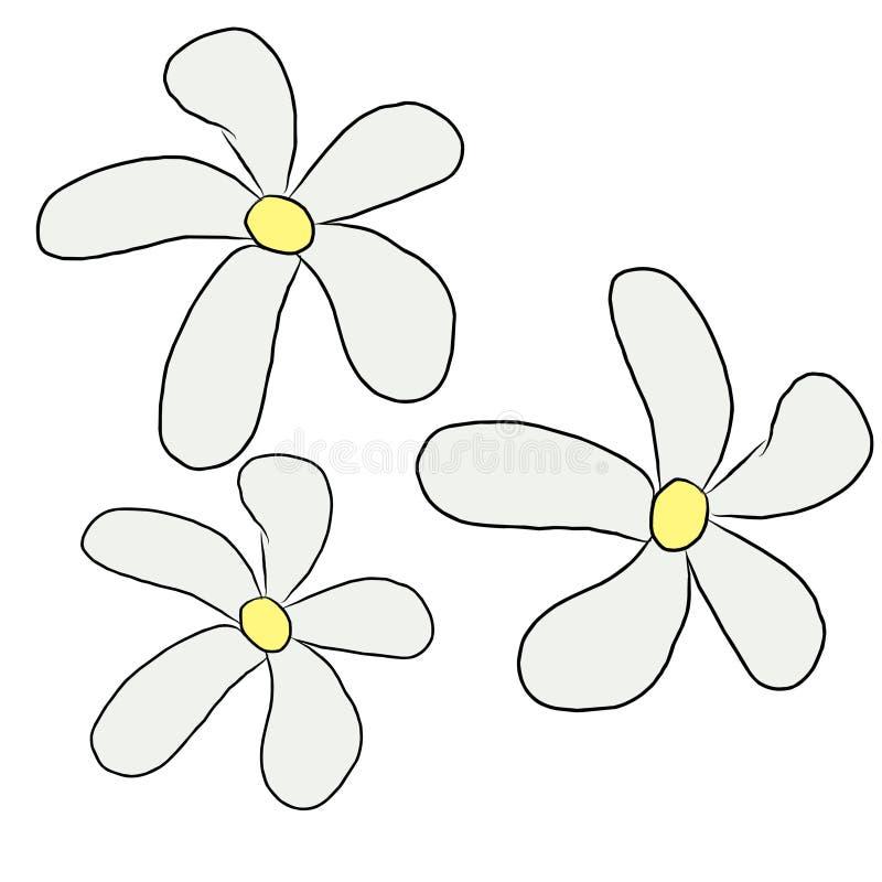 3 białej lelui kwiatu przepływ obrazy royalty free