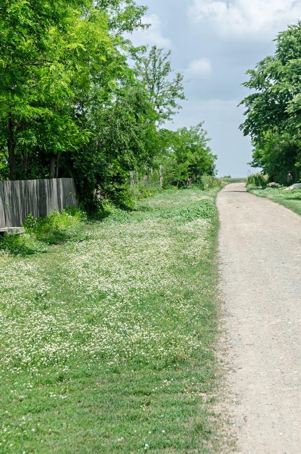 Białej stokrotki pole kwitnie, Margaret dzika łąka, wiejska ulica fotografia royalty free