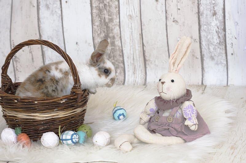 Biały łaciasty królik w koszu zdjęcia stock