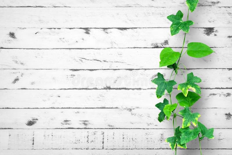 Biały ściana z cegieł tło z cierpnięcie rośliną fotografia stock