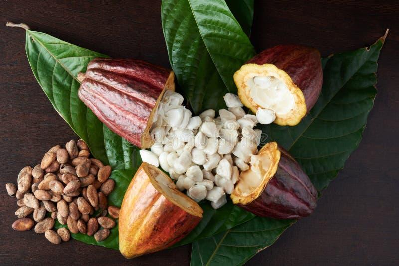 Biały świeży ziarno od cacao strąka obraz royalty free