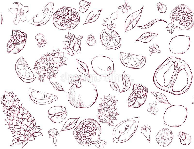 Biały bezszwowy wzór z tropikalnymi owoc ilustracji