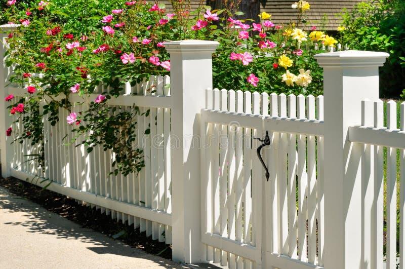 biały bram róże zdjęcia stock