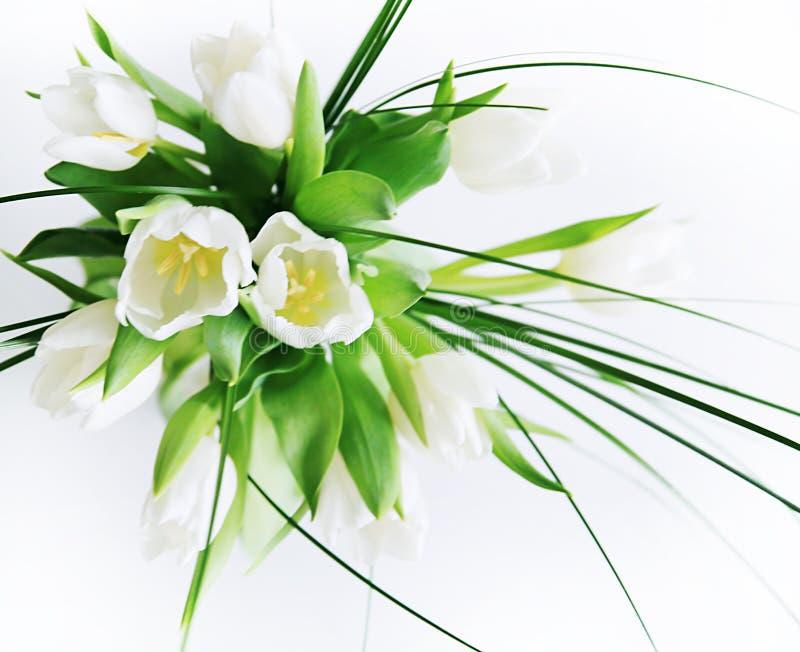 biały bukietów tulipany zdjęcie royalty free
