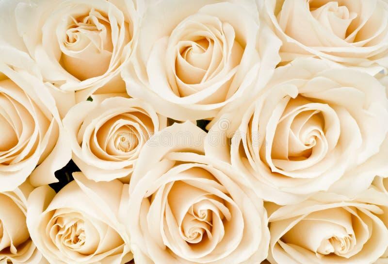 biały bukiet róże obrazy royalty free