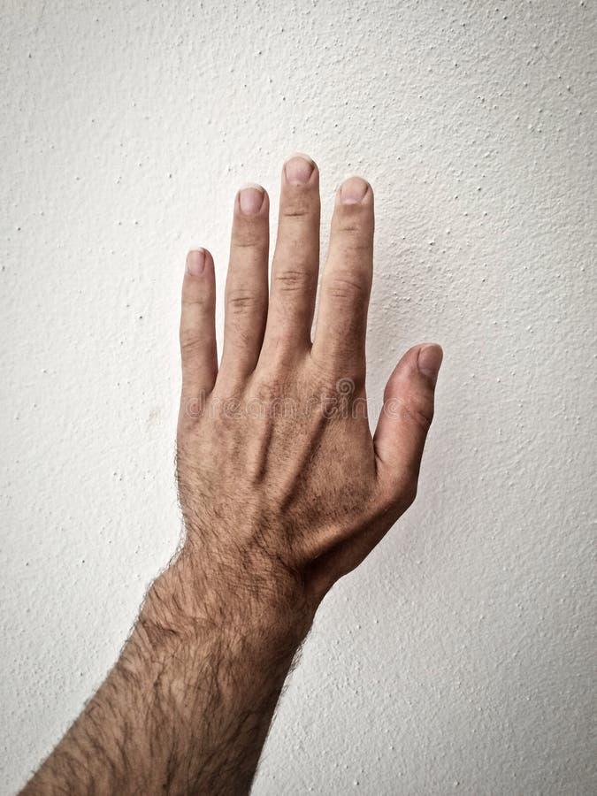 Biały człowiek palma zdjęcie royalty free
