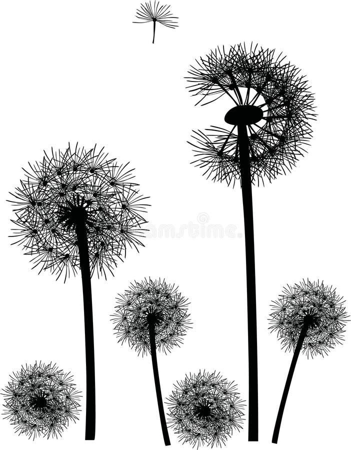 biały czarny dandelions ilustracja wektor