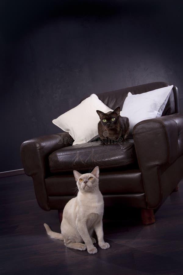 biały czarny koty zdjęcie stock