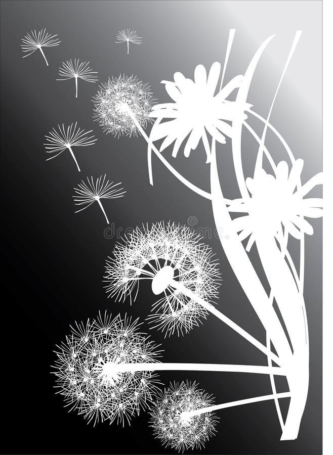 biały czarny tło dandelions ilustracji