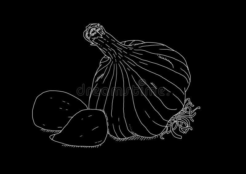 Biały czosnek na czarnym tle obrazy royalty free