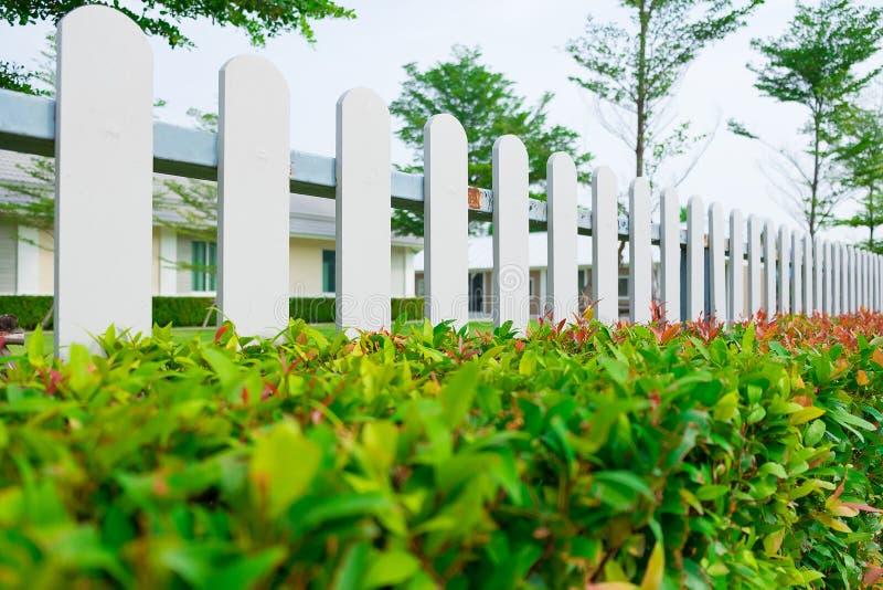 Biały drewniany palika ogrodzenie z zielonej rośliny żywopłotem obrazy stock