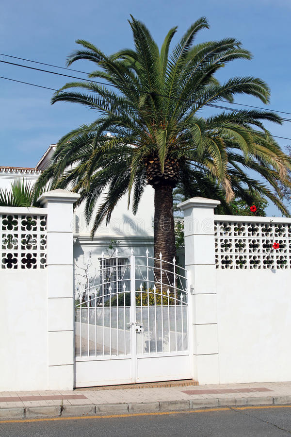 Biały drzewko palmowe i brama zdjęcia royalty free