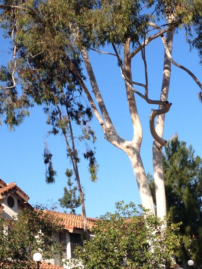Biały drzewo fotografia stock