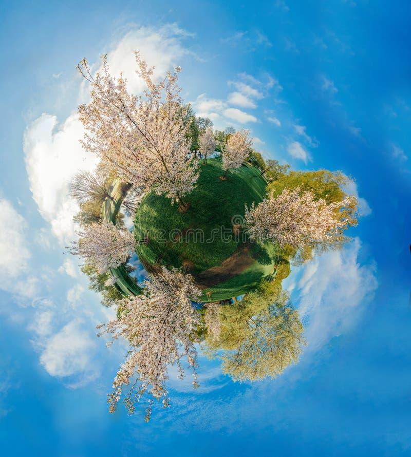 Biały drzewo w Ryskim miasta 360 VR trutnia obrazku dla rzeczywistości wirtualnej, panorama fotografia stock