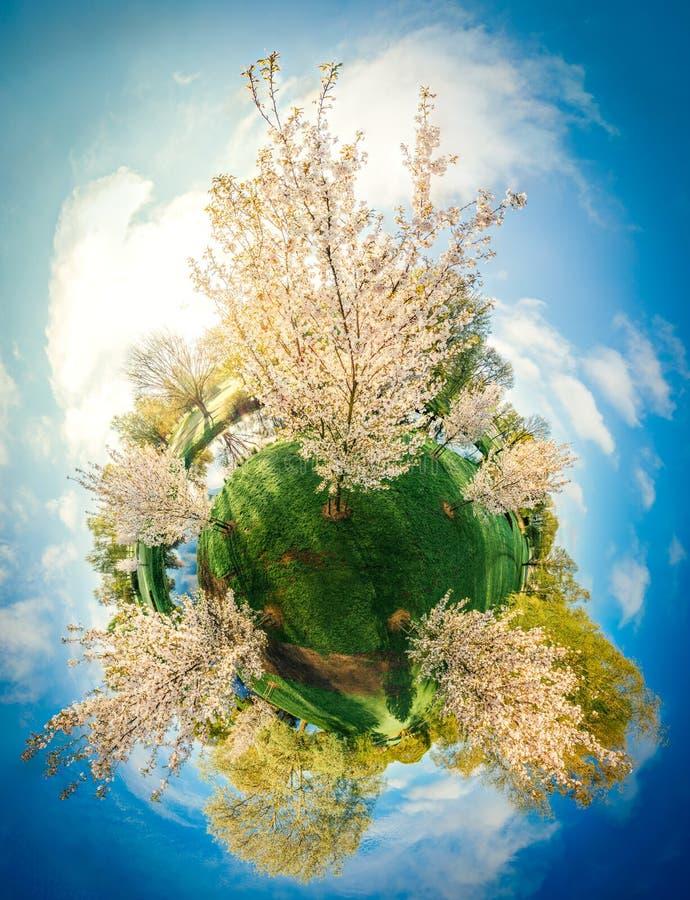 Biały drzewo w Ryskim miasta 360 VR trutnia obrazku dla rzeczywistości wirtualnej, panorama zdjęcie royalty free