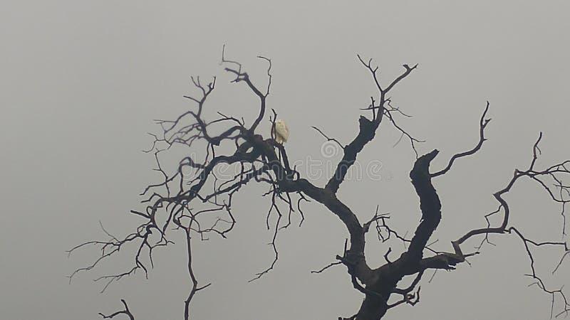 Biały egret w drzewie obraz stock