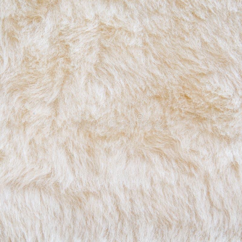 Biały futerko niedźwiedź polarny tekstura obraz stock
