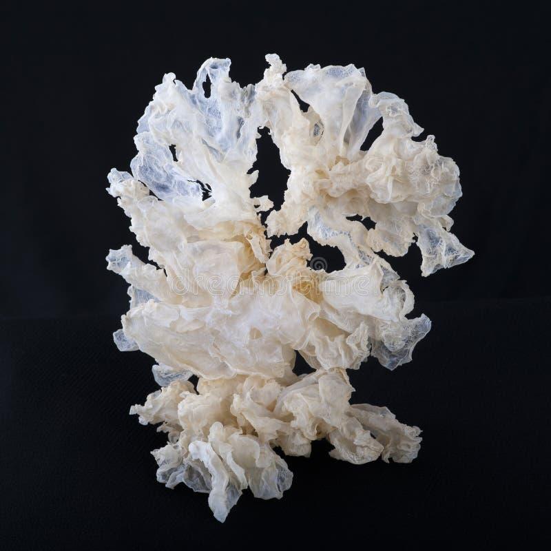 Biały grzyb obraz stock