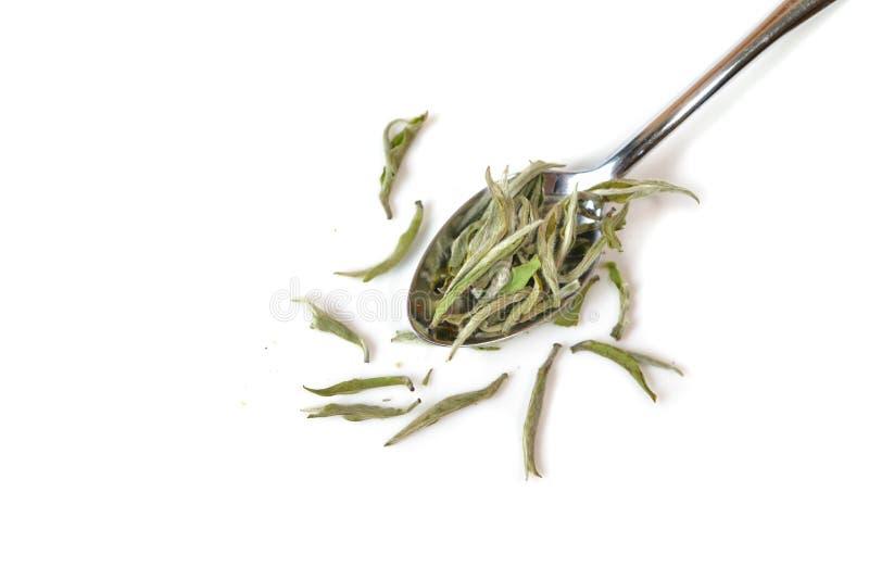 Biały herbaciany liść obraz stock