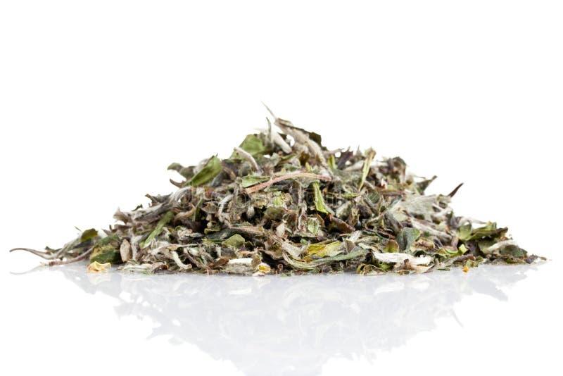 Biały herbata zdjęcia stock