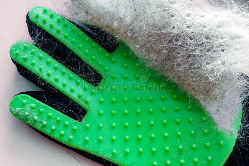 Biały i szary włosy zwierzę domowe na zielonej rękawiczce po przygotowywać, usunięcie wełna obraz stock