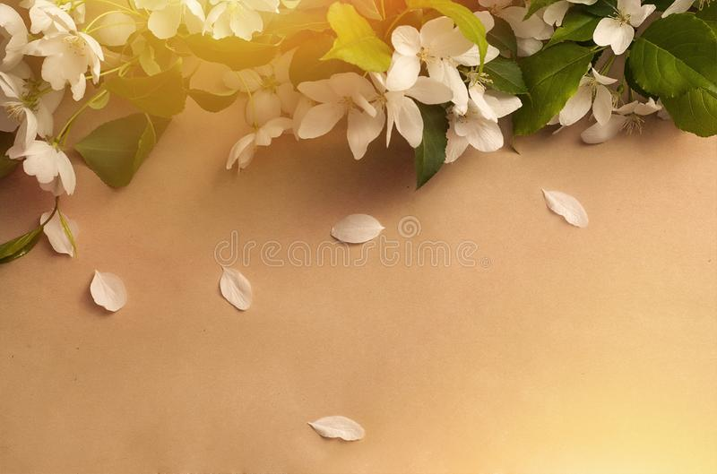 Biały jabłko kwitnie z zielonymi liśćmi obrazy royalty free
