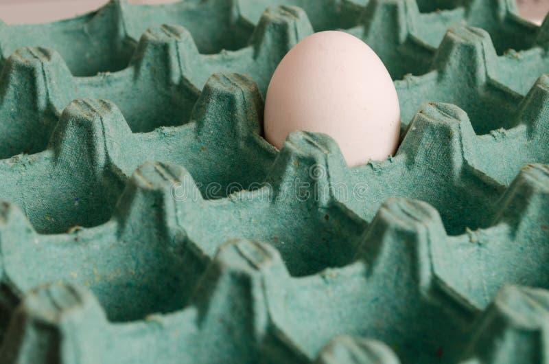 Biały jajko w pustym zielonym jajecznym kartonie obraz royalty free