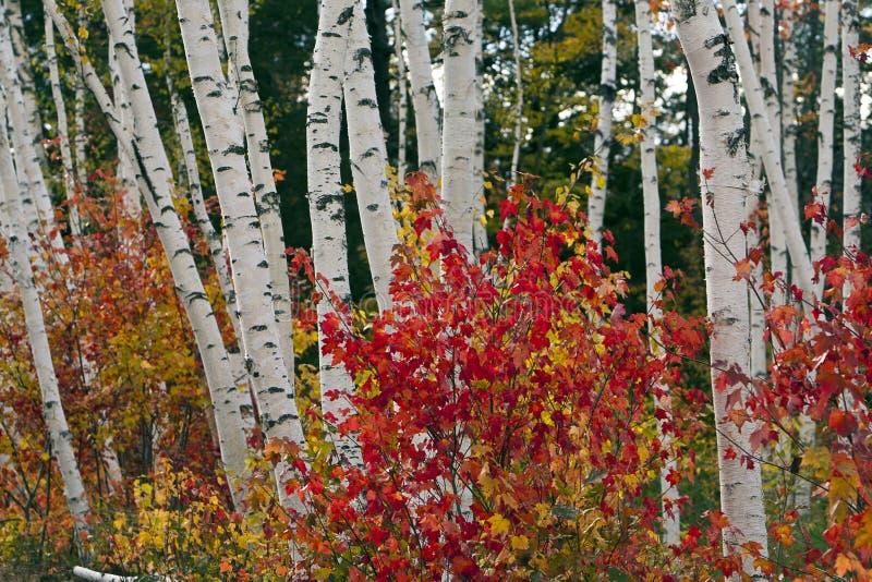 biały jesień góry fotografia stock