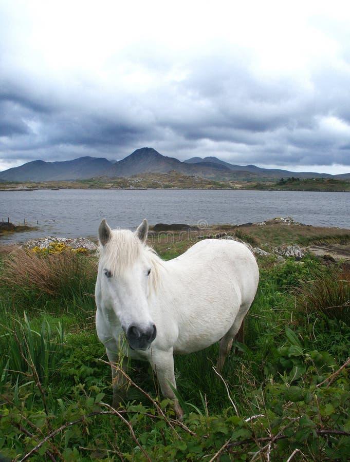 Download Biały koń zdjęcie stock. Obraz złożonej z morze, oczy, niebo - 33210