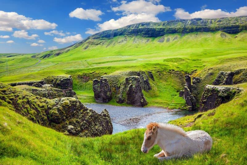 Biały koń odpoczywa w zielonej trawie obraz royalty free