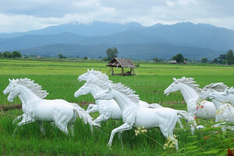 Download Biały Koń W Ryżowych Polach Obraz Stock - Obraz złożonej z roślina, uprawy: 57663989