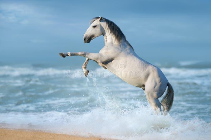 Biały koń w wodzie obrazy royalty free