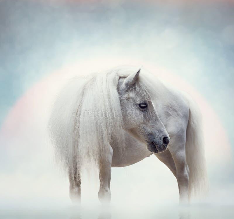 Biały Koński portret zdjęcia stock
