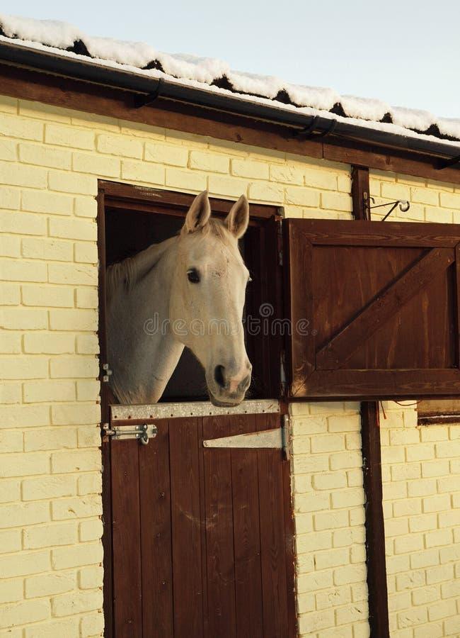 biały końskie stajenki zdjęcia stock