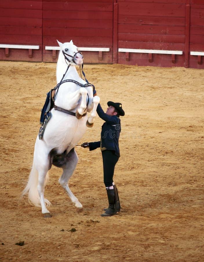 Biały konia pozycja obrazy stock