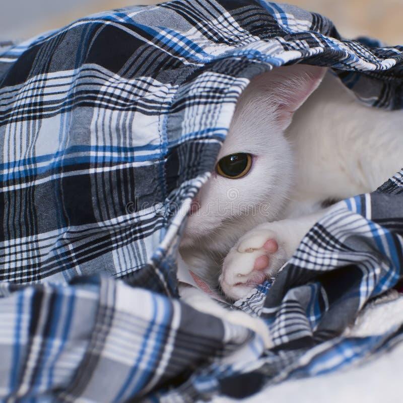 Biały kot obraz stock
