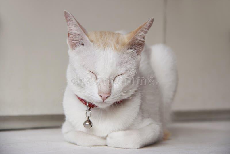 Biały kot i pomarańczowy kolor na kierowniczym kłaść puszku i zamykamy oczy na białym stole zdjęcie stock