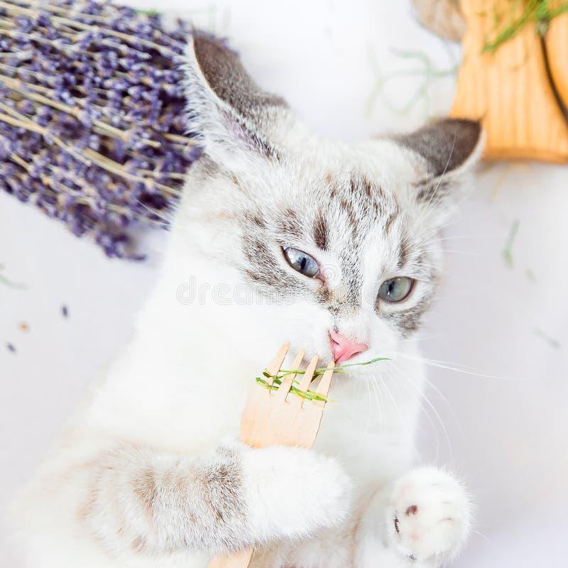 Biały kot obwąchuje trawy z eco rozwidlenia drewnianym kwadratem fotografia royalty free