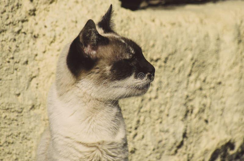 Biały kot patrzeje dobro z twarz czarnymi punktami zdjęcia stock