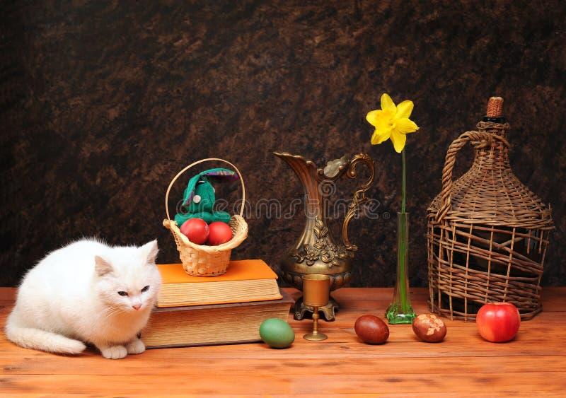 Biały kot pozuje obok książek i kwiatów obraz stock