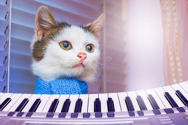 Biały kot w błękitnym szaliku blisko pianina Koncert Klasyczny Musi zdjęcie royalty free