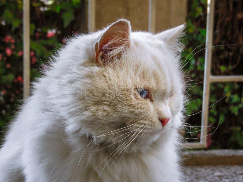 Biały kot w zimie zdjęcia royalty free